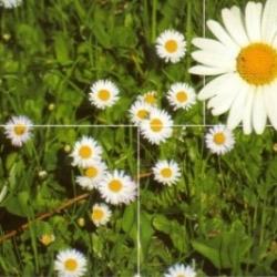 Postkarte-Ansichtskarte-Blumen-G12