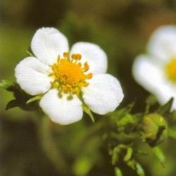 Postkarte-Ansichtskarte-Blumen-G13