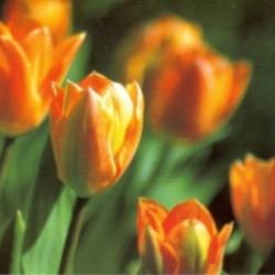 Postkarte-Ansichtskarte-Blumen-G14