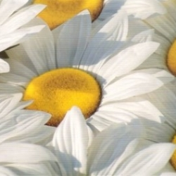 Postkarte-Ansichtskarte-Blumen-G15