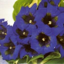 Postkarte-Ansichtskarte-Blumen-G16