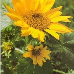 Postkarte-Ansichtskarte-Blumen-G1