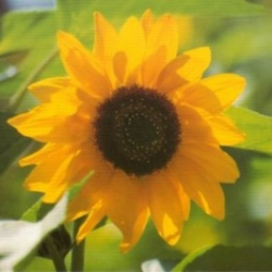 Postkarte-Ansichtskarte-Blumen-G3