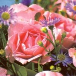 Postkarte-Ansichtskarte-Blumen-G5