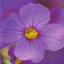 Postkarte-Ansichtskarte-Blumen-G8