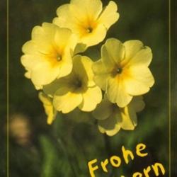 Postkarte-Ansichtskarte-Blumen-GO1